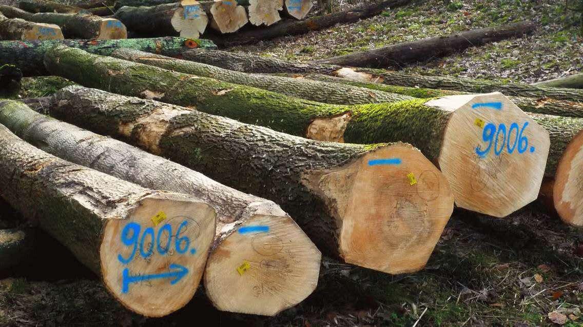 Logs-ash