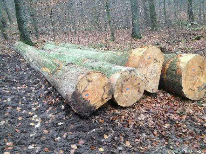 Logs-beech
